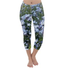 Little Blue Forget-me-not flowers Capri Winter Leggings