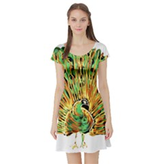 Peacock Bird Short Sleeve Skater Dress