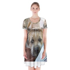 Border Terrier Begging Short Sleeve V-neck Flare Dress