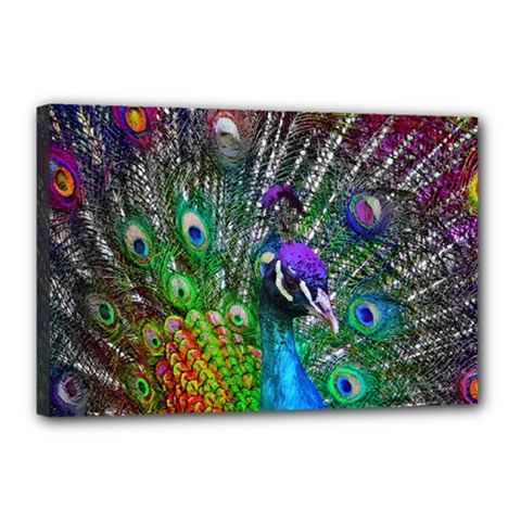 3d Peacock Pattern Canvas 18  x 12