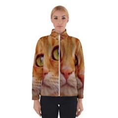 Cat Red Cute Mackerel Tiger Sweet Winterwear