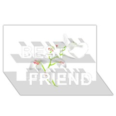 Isolated Orquideas Blossom Best Friends 3d Greeting Card (8x4)