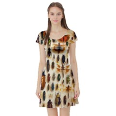 Insect Collection Short Sleeve Skater Dress