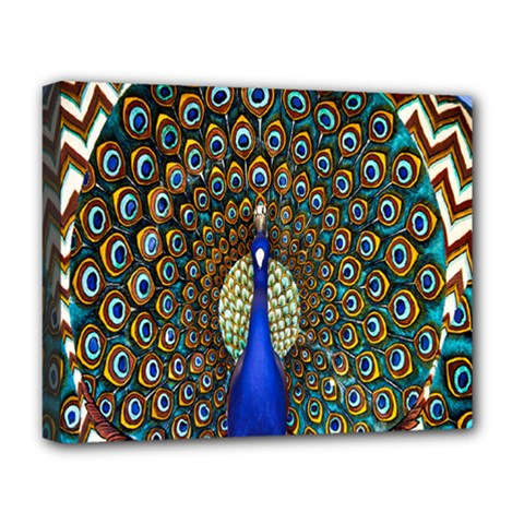 The Peacock Pattern Deluxe Canvas 20  x 16