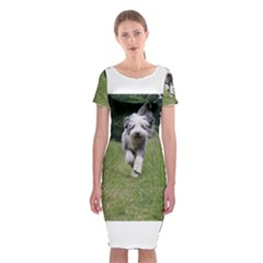 Bearded Collie In Motion Classic Short Sleeve Midi Dress