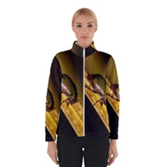 Insect  Winterwear