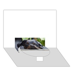 Rottweiler 2 Circle Bottom 3D Greeting Card (7x5)