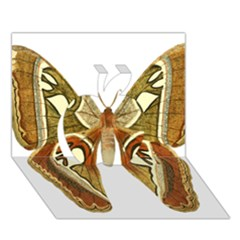 Butterfly Animal Insect  Apple 3D Greeting Card (7x5)
