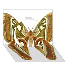 Butterfly Animal Insect  Circle 3D Greeting Card (7x5)