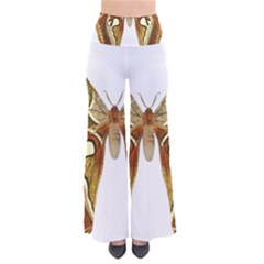 Butterfly Animal Insect  Pants
