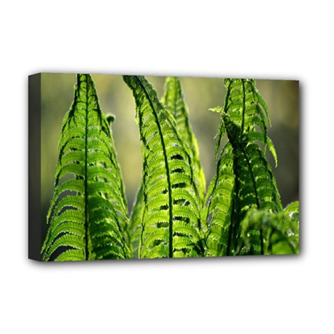 Fern Ferns Green Nature Foliage Deluxe Canvas 18  x 12