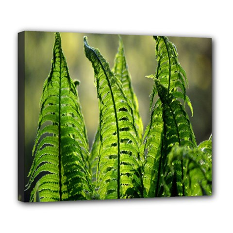 Fern Ferns Green Nature Foliage Deluxe Canvas 24  x 20