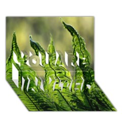 Fern Ferns Green Nature Foliage YOU ARE INVITED 3D Greeting Card (7x5)