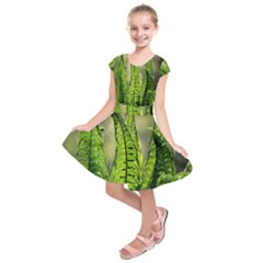 Fern Ferns Green Nature Foliage Kids  Short Sleeve Dress