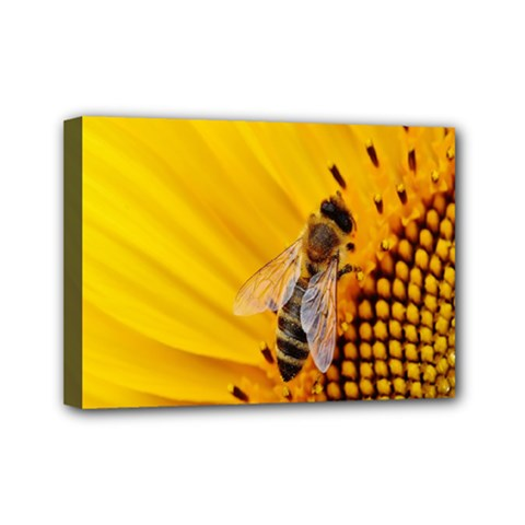 Sun Flower Bees Summer Garden Mini Canvas 7  x 5