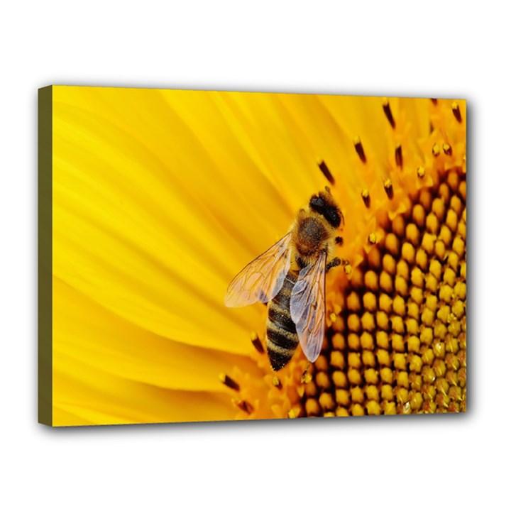 Sun Flower Bees Summer Garden Canvas 16  x 12