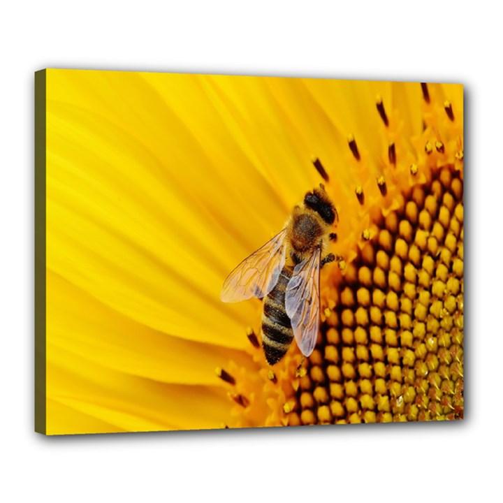 Sun Flower Bees Summer Garden Canvas 20  x 16