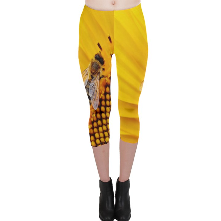 Sun Flower Bees Summer Garden Capri Leggings