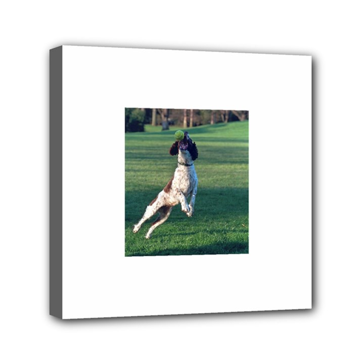 English Springer Catching Ball Mini Canvas 6  x 6