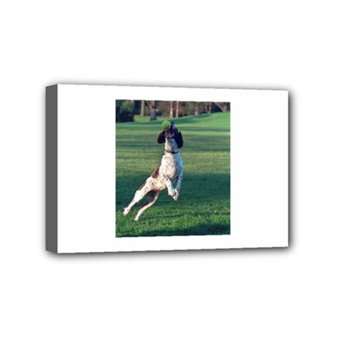 English Springer Catching Ball Mini Canvas 6  x 4