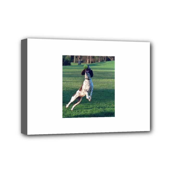 English Springer Catching Ball Mini Canvas 7  x 5