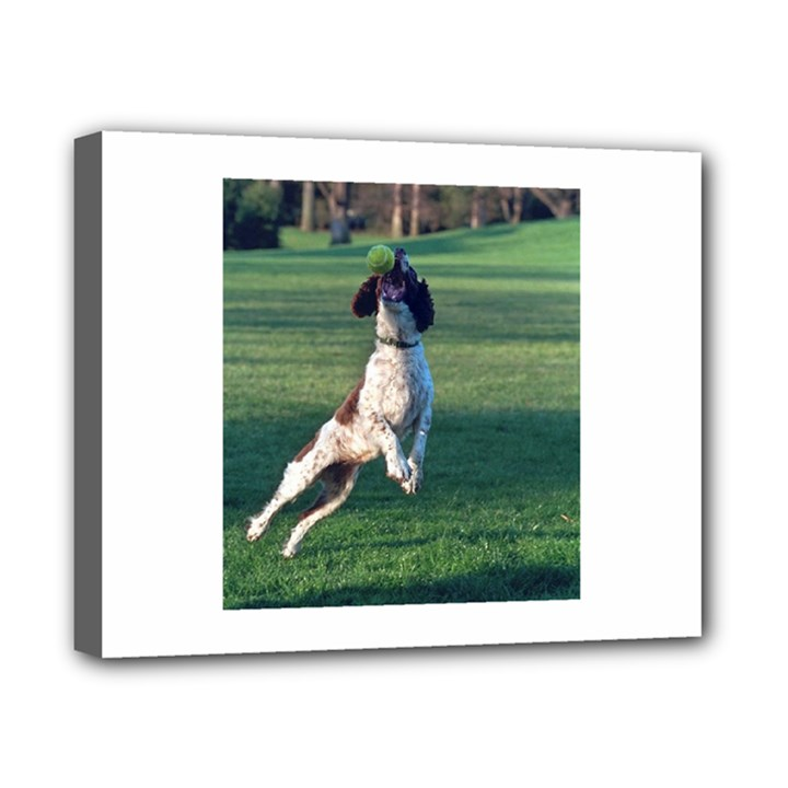 English Springer Catching Ball Canvas 10  x 8