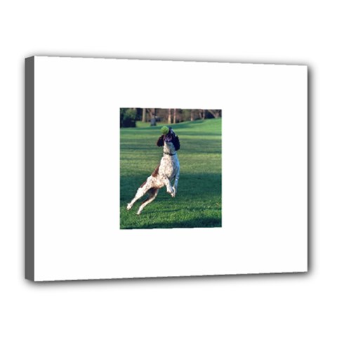 English Springer Catching Ball Canvas 16  x 12