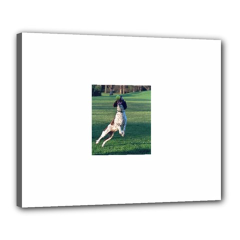 English Springer Catching Ball Canvas 20  x 16