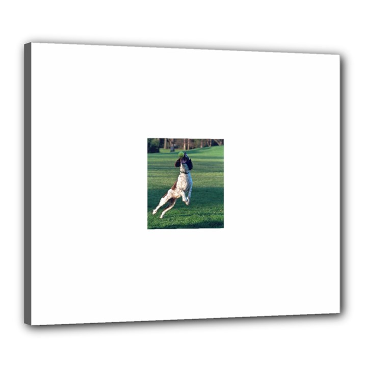 English Springer Catching Ball Canvas 24  x 20