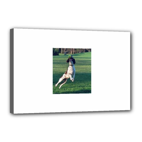 English Springer Catching Ball Canvas 18  x 12