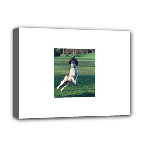 English Springer Catching Ball Deluxe Canvas 16  x 12