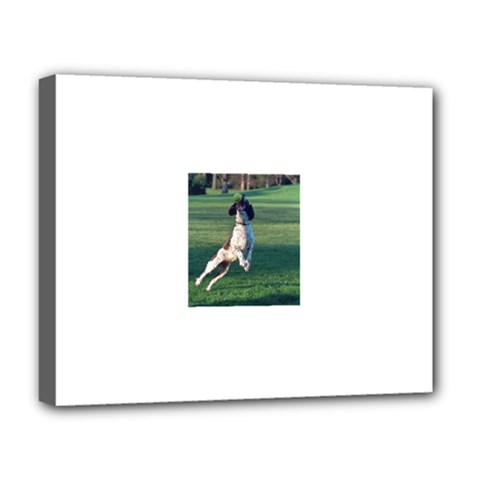 English Springer Catching Ball Deluxe Canvas 20  x 16