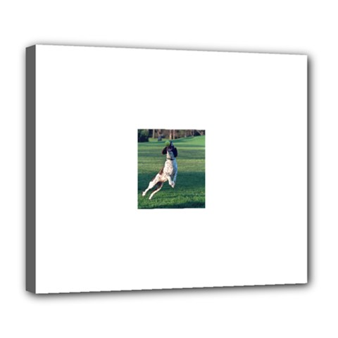 English Springer Catching Ball Deluxe Canvas 24  x 20