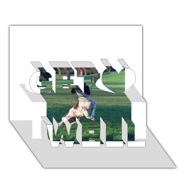 English Springer Catching Ball Get Well 3D Greeting Card (7x5)