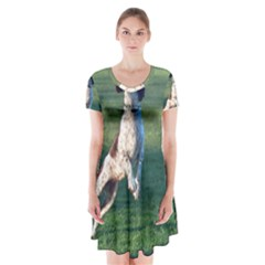 English Springer Catching Ball Short Sleeve V-neck Flare Dress