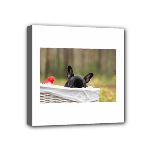 French Bulldog Peeking Puppy Mini Canvas 4  x 4