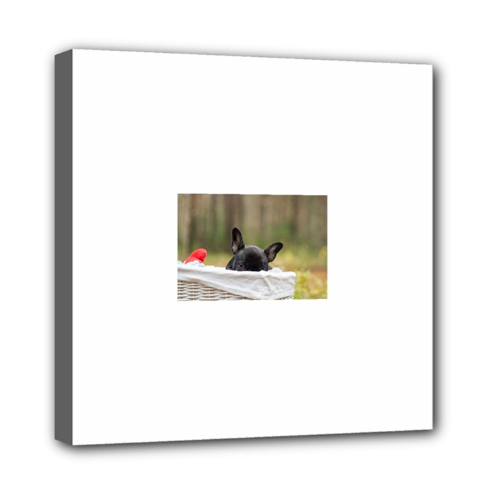 French Bulldog Peeking Puppy Mini Canvas 8  x 8