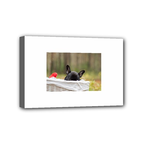 French Bulldog Peeking Puppy Mini Canvas 6  x 4