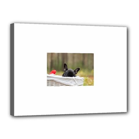 French Bulldog Peeking Puppy Canvas 16  x 12