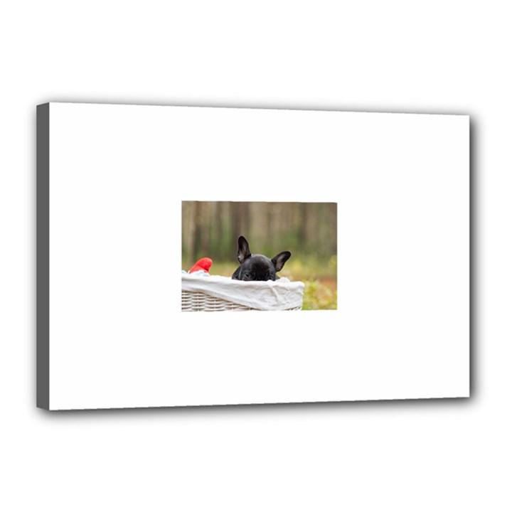 French Bulldog Peeking Puppy Canvas 18  x 12