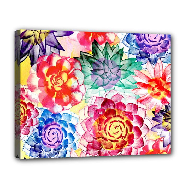 Colorful Succulents Canvas 14  x 11