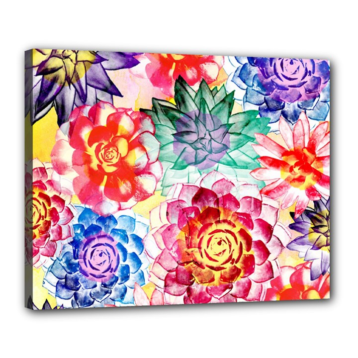 Colorful Succulents Canvas 20  x 16