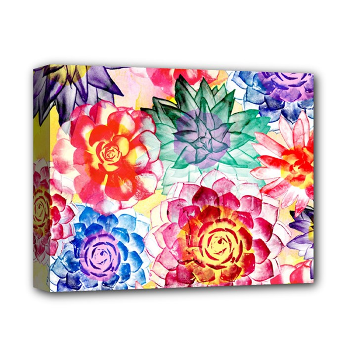 Colorful Succulents Deluxe Canvas 14  x 11