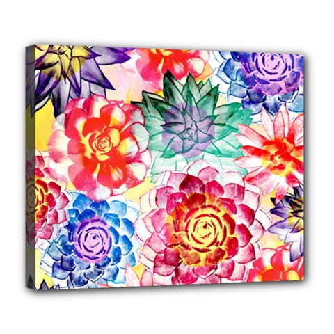 Colorful Succulents Deluxe Canvas 24  x 20