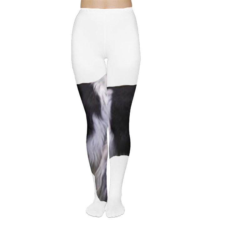 English Setter Full Women s Tights