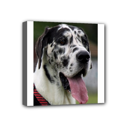 Great Dane harlequin  Mini Canvas 4  x 4