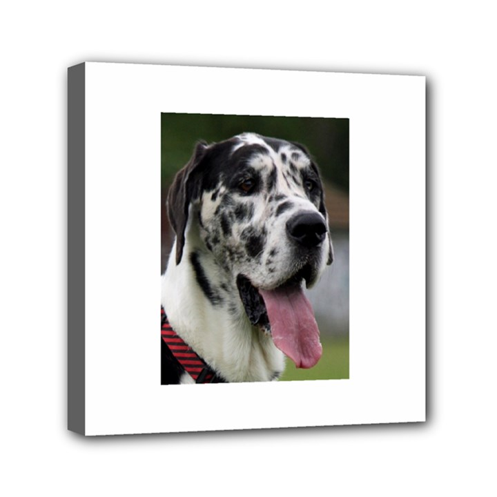 Great Dane harlequin  Mini Canvas 6  x 6