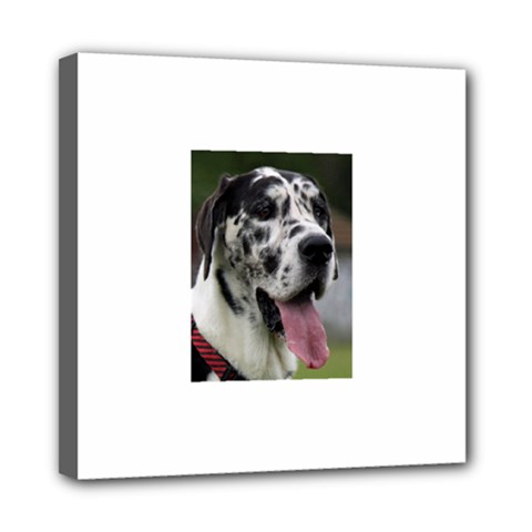Great Dane harlequin  Mini Canvas 8  x 8