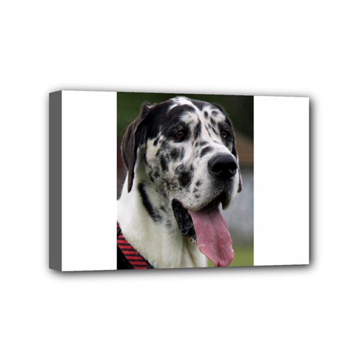 Great Dane harlequin  Mini Canvas 6  x 4