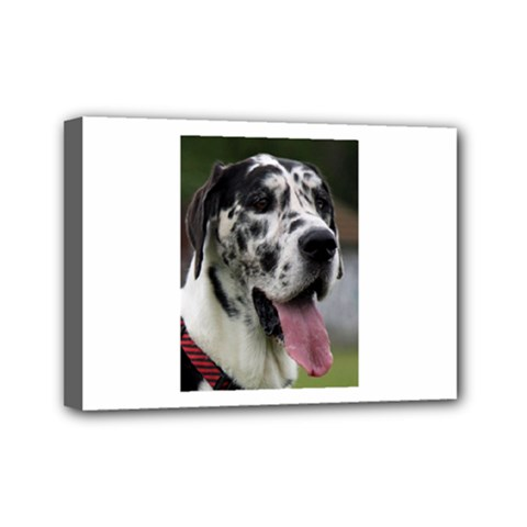 Great Dane harlequin  Mini Canvas 7  x 5